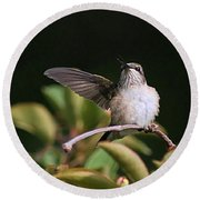 Ruby-throated Hummingbird - Juvenile Round Beach Towel