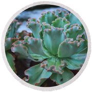 Echeveria Rosea  Round Beach Towel
