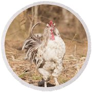 Ruffled Rooster Round Beach Towel