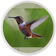 Rufus Hummingbird In Flight Round Beach Towel