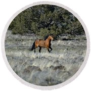 Running Bachelor Stallion Round Beach Towel