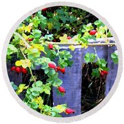 Rustic Fence And Wild Rosehips Round Beach Towel