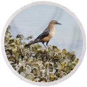 Rusty Blackbird #6 Round Beach Towel