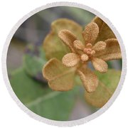 Rusty Lyonia Round Beach Towel