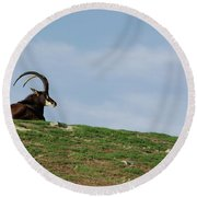 Sable Antelope On Hill Round Beach Towel