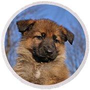 Sable German Shepherd Puppy II Round Beach Towel by Sandy Keeton