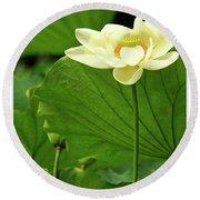 Sacred Lotus In Black Frame Round Beach Towel