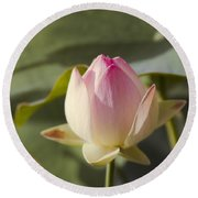 Sacred Lotus - Nelumbo Round Beach Towel