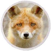 Sad Eyed Fox Of The Lowlands - Red Fox Portrait Round Beach Towel