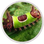 Saddleback Caterpillar Round Beach Towel