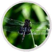 Saddlebag Dragonfly Round Beach Towel