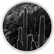 Saguaro Backlit Black And White Round Beach Towel