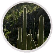 Saguaro Cactus Backlit Round Beach Towel