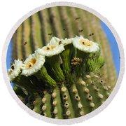 Saguaro Cactus Flower 8 Round Beach Towel