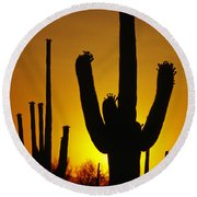 Saguaro Sunset Round Beach Towel by Sandra Bronstein