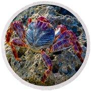 Sally Lightfoot Crab 1 Round Beach Towel
