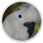 Salmon Crested Cockatoo Round Beach Towel