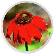 Salsa Red Coneflower Round Beach Towel