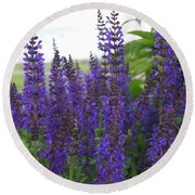 Salvia In The Spring Round Beach Towel