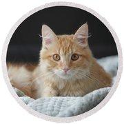 Samson_speaks Kitten Years Round Beach Towel