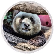 San Diego Zoo California Giant Panda Round Beach Towel