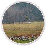 Sand Hill Crane Migration Round Beach Towel