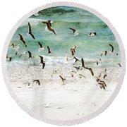 Sandestin Seagulls D Round Beach Towel