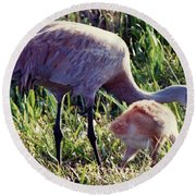 Sandhill Crane And Chick Round Beach Towel