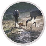 Sandhill Crane Family In Morning Sunshine Round Beach Towel by Carol Groenen