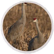 Sandhill Cranes On Watch Round Beach Towel