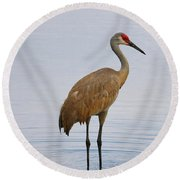 Sandhill Standing In Peaceful Pond Round Beach Towel