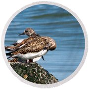 Sandpipers 2 Round Beach Towel