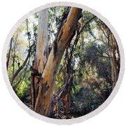 Santa Barbara Eucalyptus Forest Round Beach Towel