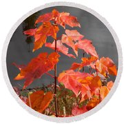 Sapling By The Pond Round Beach Towel
