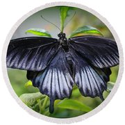 Sapphire Blue Swallowtail Butterfly Round Beach Towel