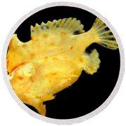 Sargassum Anglerfish Round Beach Towel