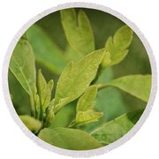 Sassafras Tree Round Beach Towel