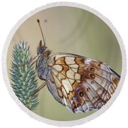 Satyr Butterfly On Blade Of Grass Round Beach Towel
