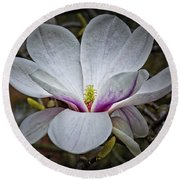 Saucer Magnolia - Magnolia Soulangeana Round Beach Towel