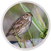 Savanah Sparrow Round Beach Towel