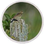 Savannah Sparrow.. Round Beach Towel