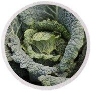 Savoy Cabbage In The Vegetable Garden Round Beach Towel