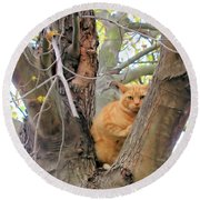 Scared Up A Tree Round Beach Towel