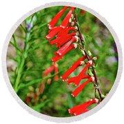 Scarlet Bugler In Rancho Santa Ana Botanic Garden In Claremont-californi Round Beach Towel