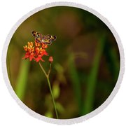 Scarlet Milkweed And Butterfly Round Beach Towel