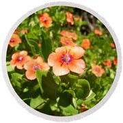 Scarlet Pimpernel Flower Photograph Round Beach Towel