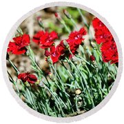 Scarlet Red Dianthus Round Beach Towel