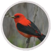 Scarlet Tanager On Stalk Round Beach Towel