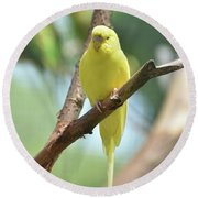Scenic View Of An Adorable Yellow Parakeet Round Beach Towel
