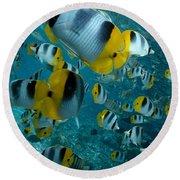 School Of Butterflyfish Round Beach Towel